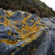 sm lichen and shore