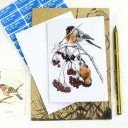 Bullfinches - photo by Hannah Longmuir