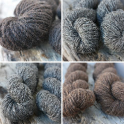 Pure Zwartbles, Zwartbles~Cheviot, Zwartbles~Alpaca, Zwartbles~Mohair (clockwise from top left)